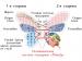 Матрас MatroLuxe Butterfly Camelia (Камелия) двухсторонний
